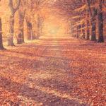 Three Things — Fall Edition